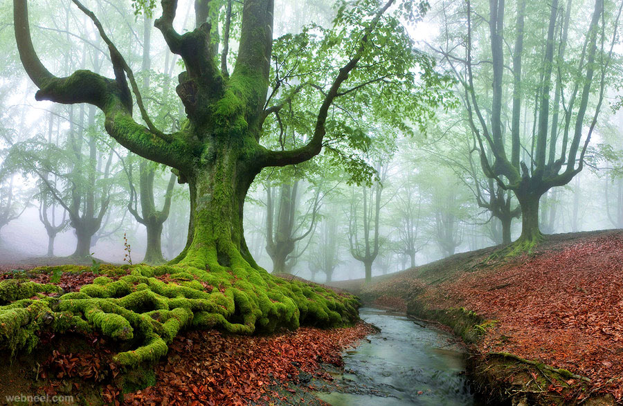 Nature-Photography-Tree-The-Coolist