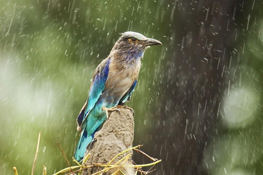 Essay about rainy season in india