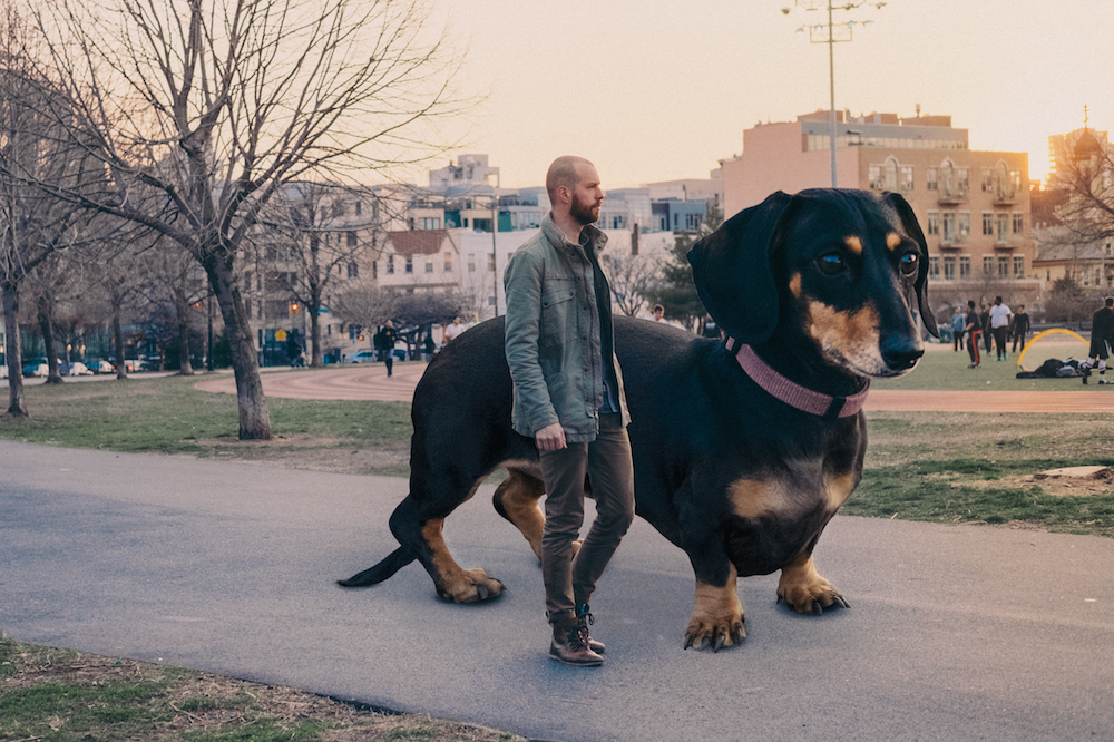 Boyer and Vivian in the park The Magic of Photo Editing: It's a Dog's World and We're All just Living in it!