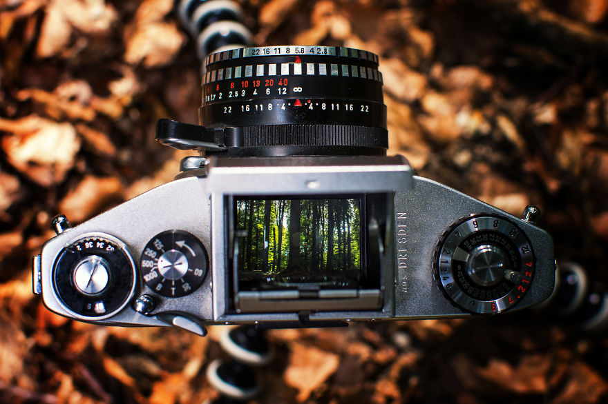 Closely set trees through a vintage viewfinder