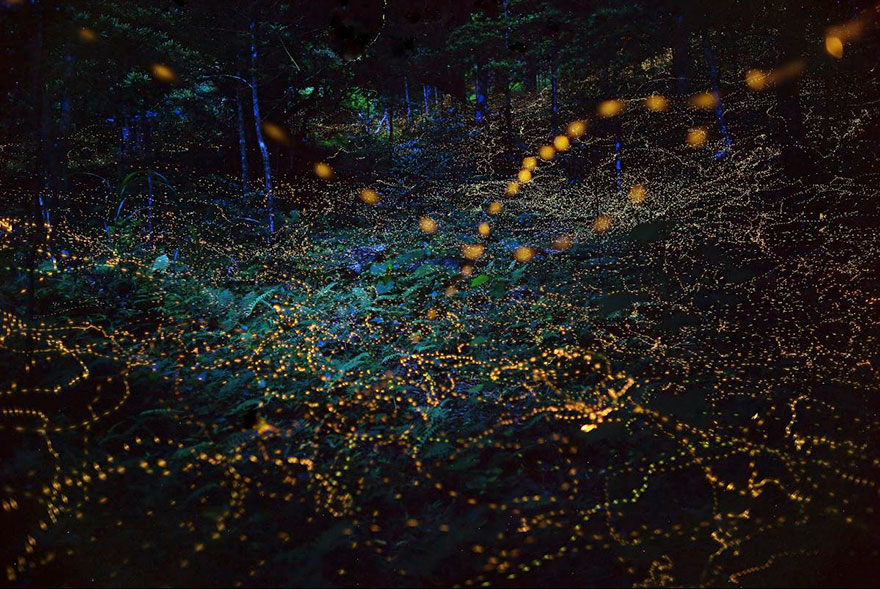 Fireflies across a landscape by Yume Cyan Skilled Photographers Capture Japans Gorgeous Summer Firefly Phenomenon