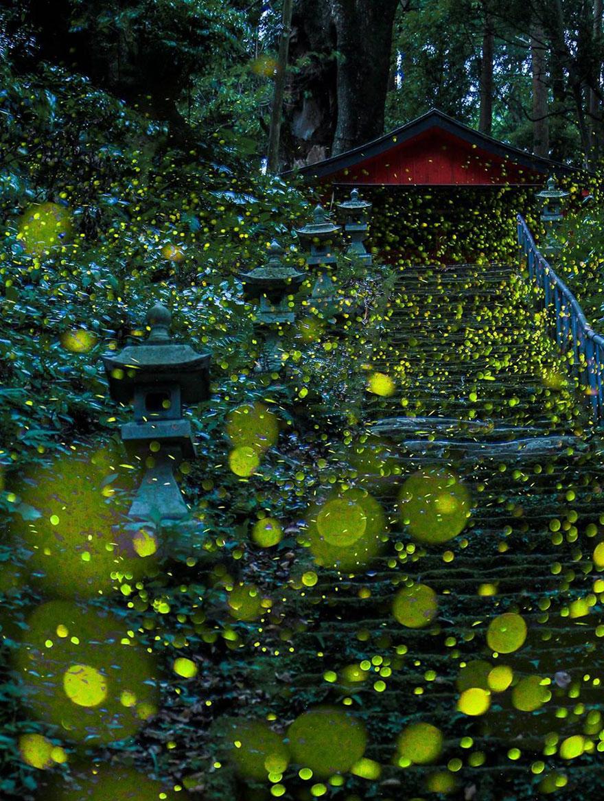 Fireflies around a monument by Hiroyuki Shinohara