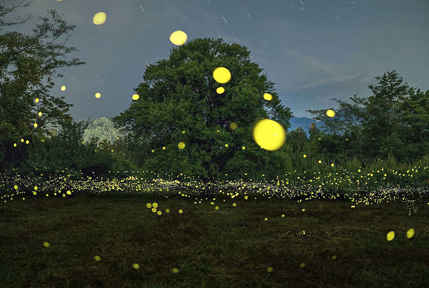 Fireflies from across a field by zabby