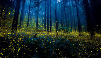 Skilled Photographers Capture Japan's Gorgeous Summer Firefly Phenomenon