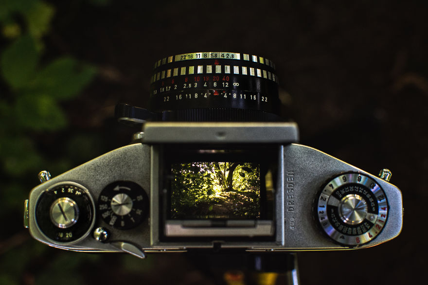 Sunlit leaves through a vintage viewfinder