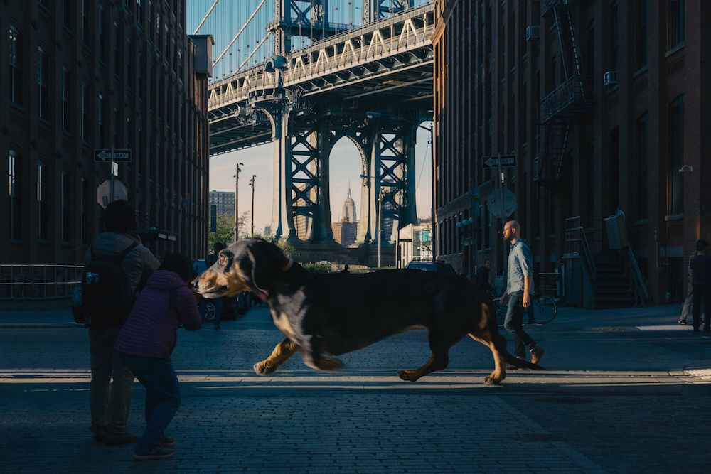 Vivian the giant daschund – roamng the streets of the big city