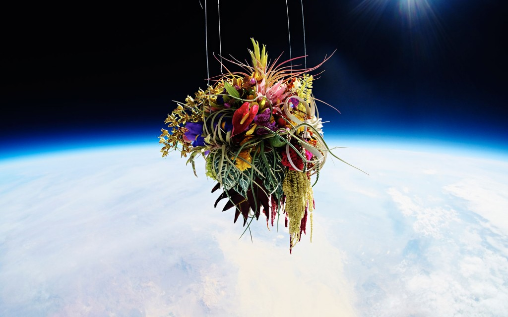 exobiotanica 1 Japanese Flower Artist Sends Plants Into Space for Breathtaking Photo Series
