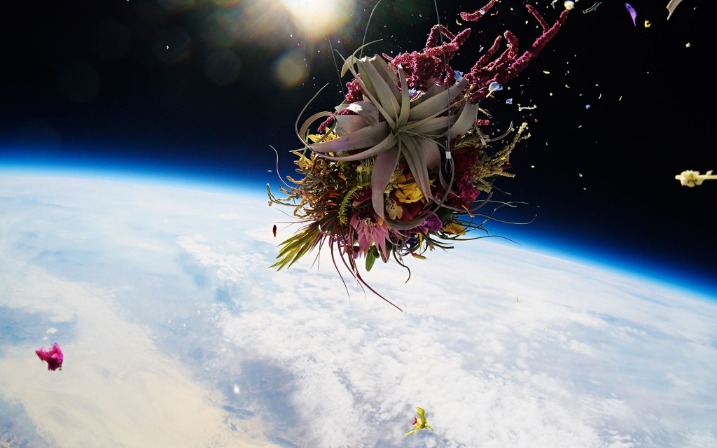 exobiotanica 3 Japanese Flower Artist Sends Plants Into Space for Breathtaking Photo Series