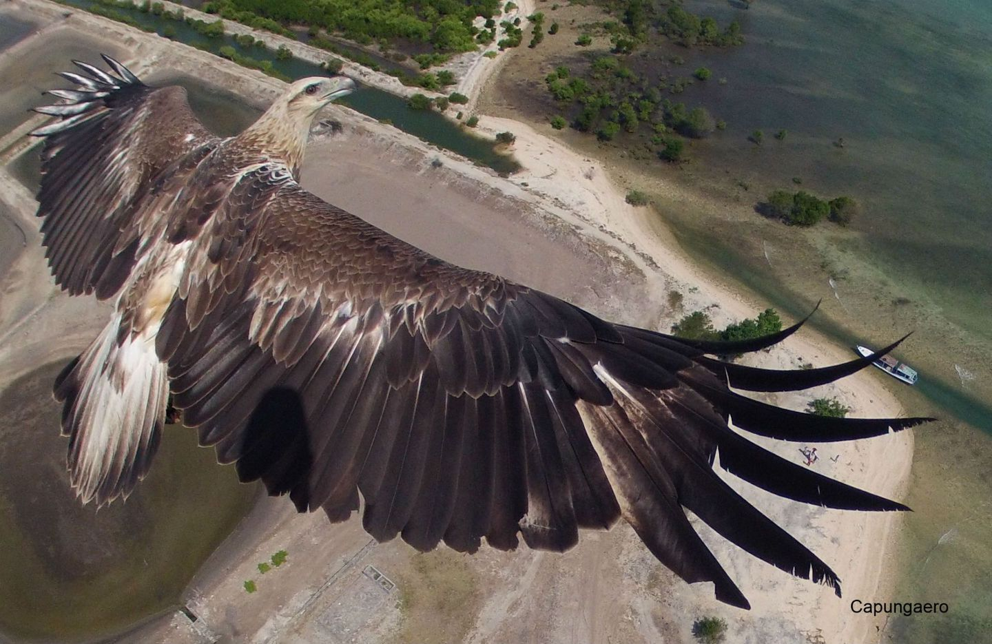 Taking Wing – drone photo