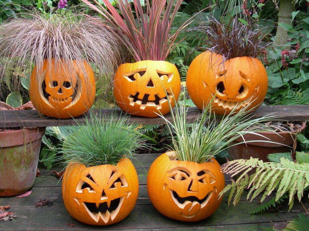 Plants – pumpkin carving halloween