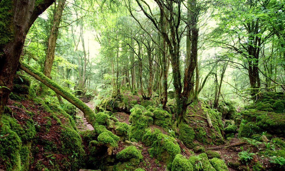 Puzzlewood in the Forest of Dean Force Awakens – tv and film travel destination