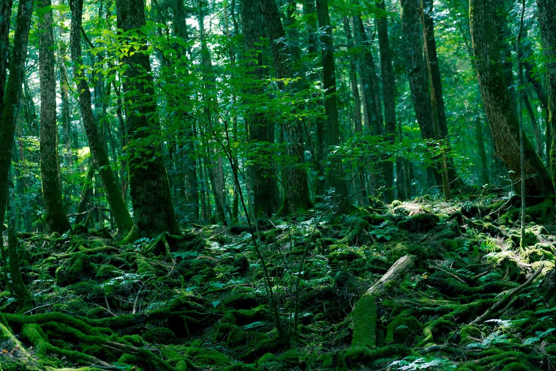 Aokigahara Suicide Forest Koshu Japan – honeymoon destination