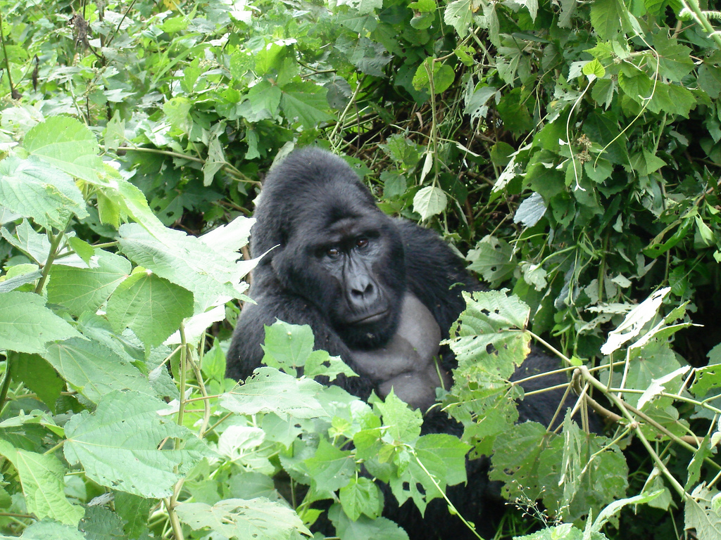Bwindi Forest National Park Uganda – honeymoon destination