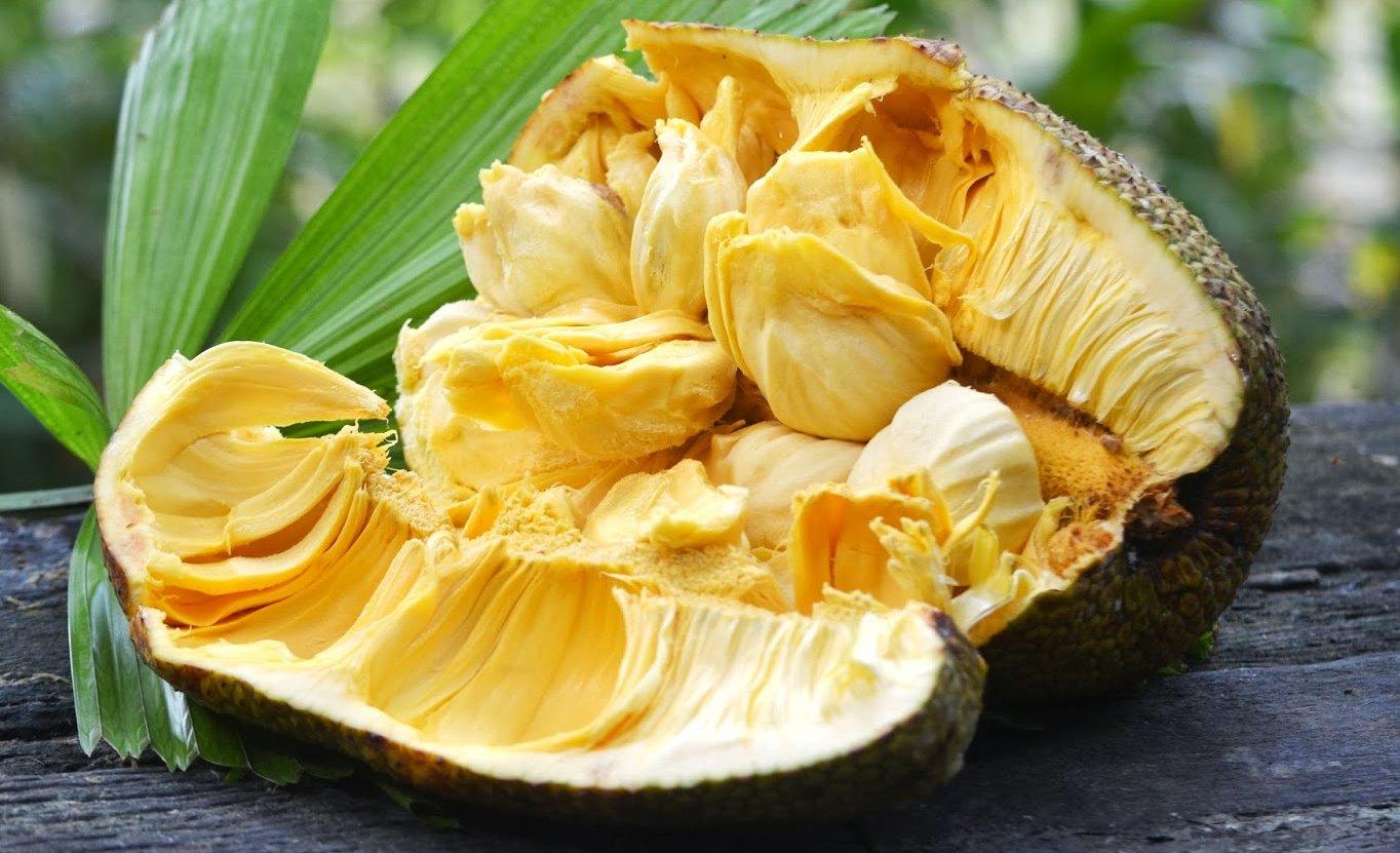 Cempedak – asian fruit