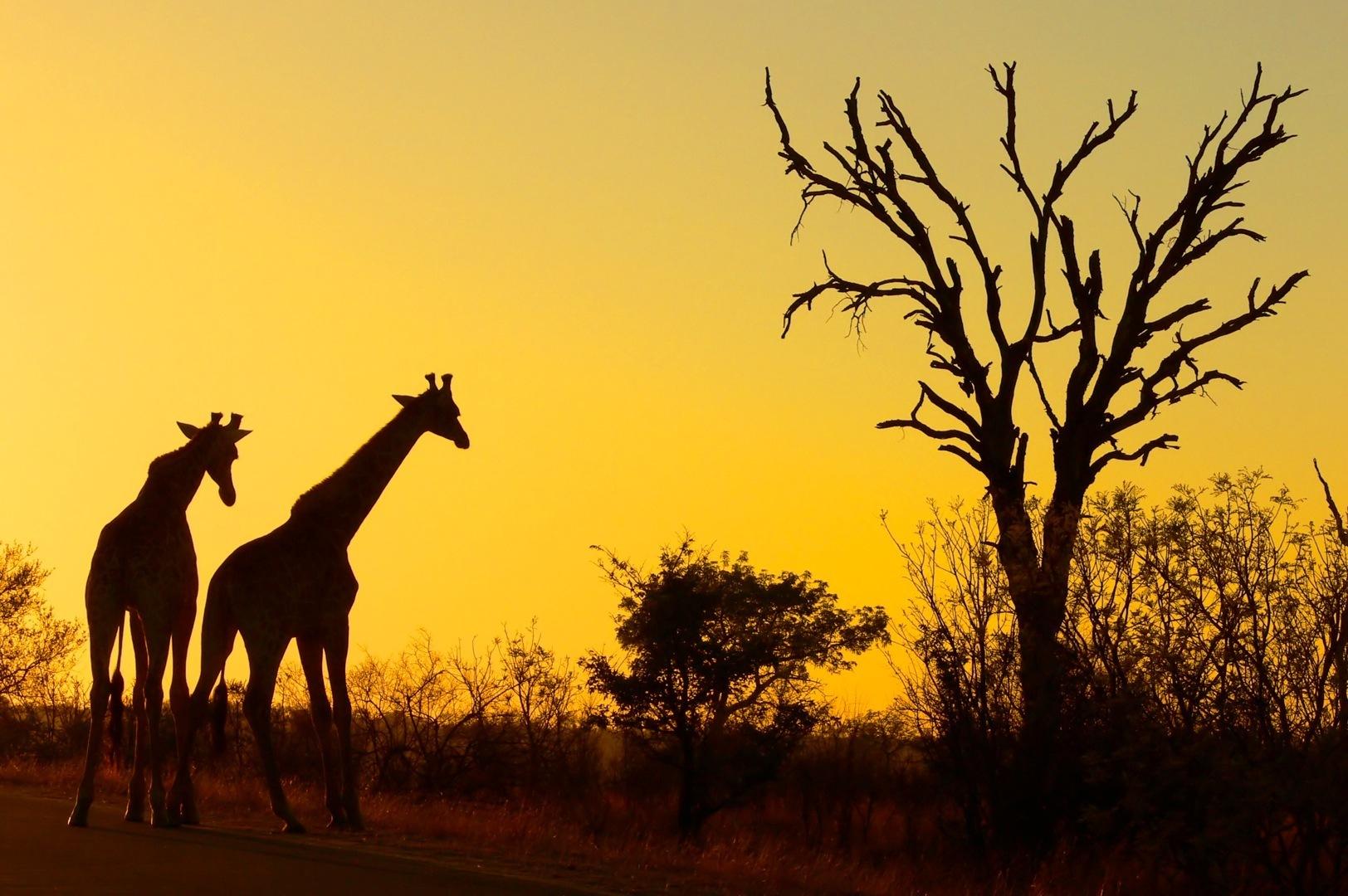 Kruger National Park South Africa – honeymoon destination