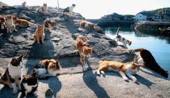 Tashirojima Cat Island honeymoon destination 345x200 26 Wild Honeymoon Destinations For Wedded Weirdos