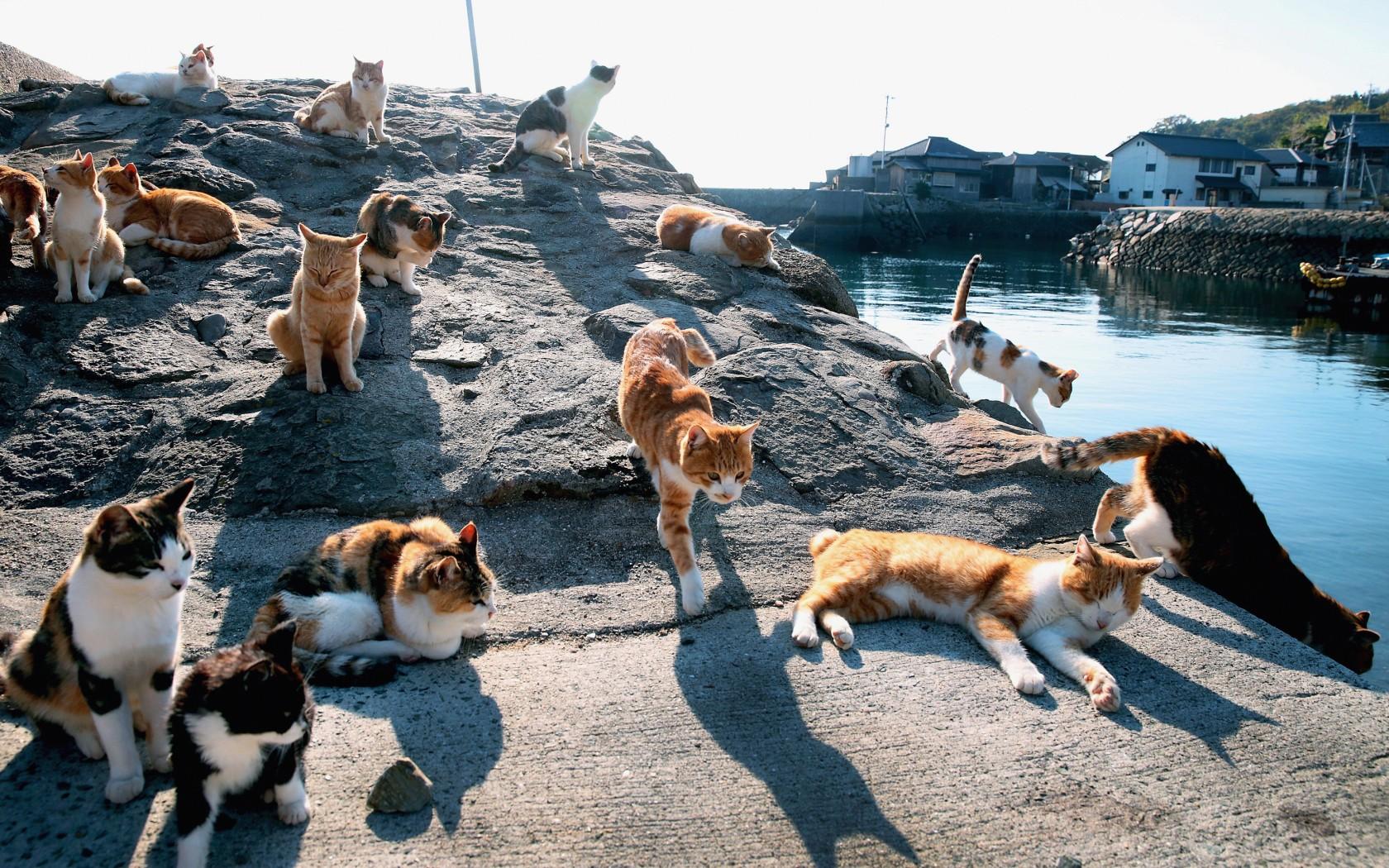 Tashirojima Cat Island – honeymoon destination