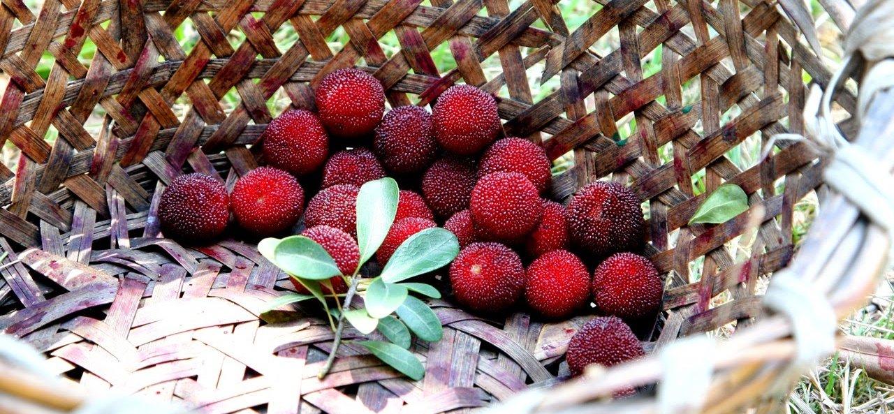 Yangmei – asian fruit