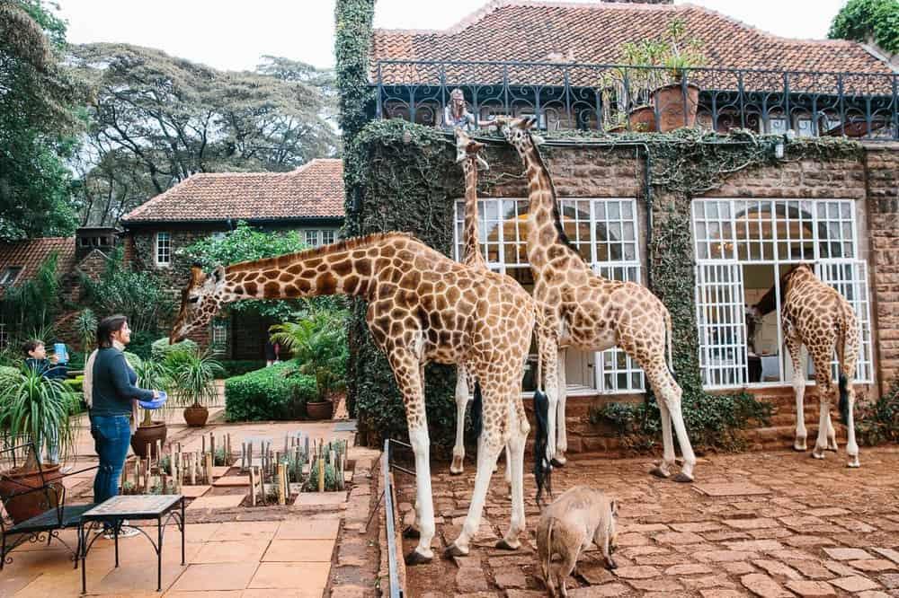 Giraffe Manor – weird resort
