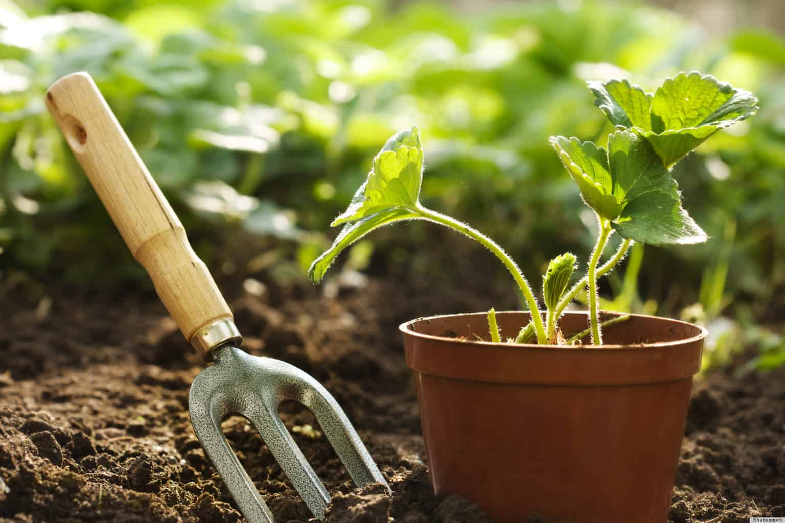 Gardening – hobbies for men