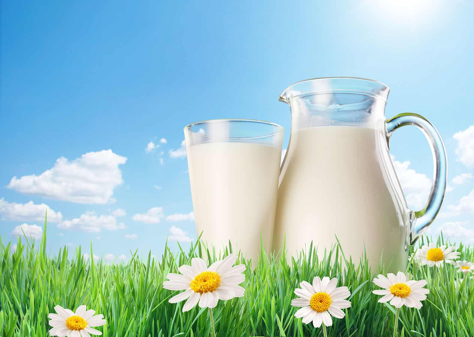 Milk Is Good For You – science myth