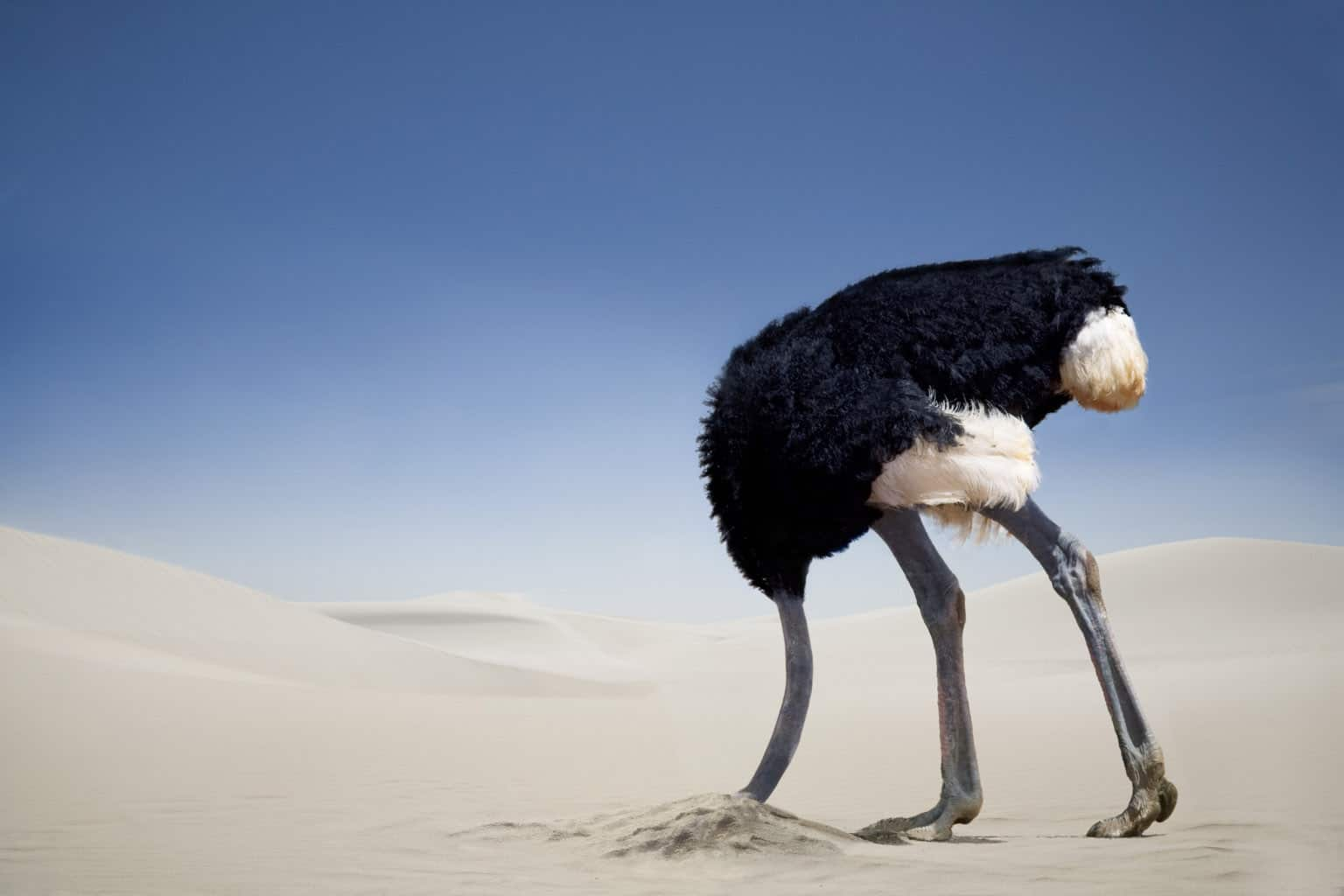 Ostriches Put Their Head In The Sand – science myth