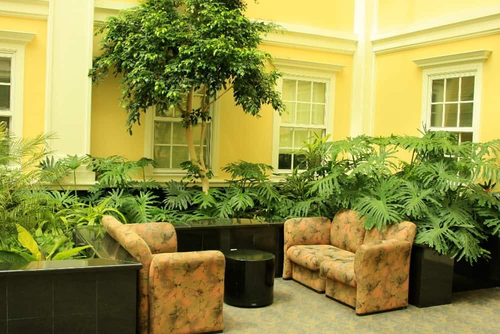Plants – reduce allergies