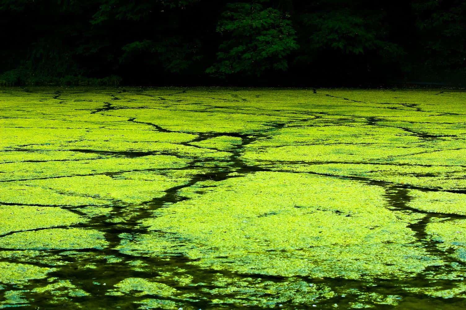 Algae Armageddon – doomsday scenario