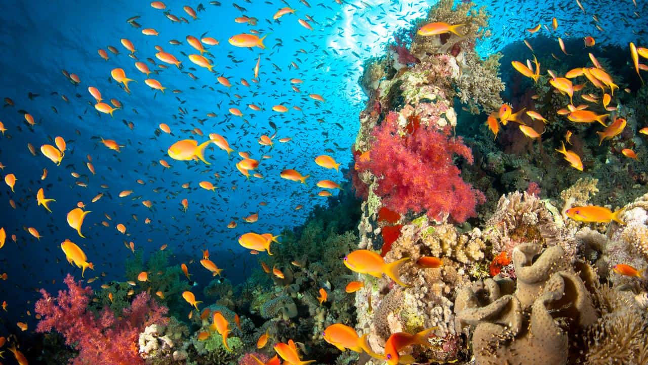 Don't Touch the Coral – travel tip caribbean islands