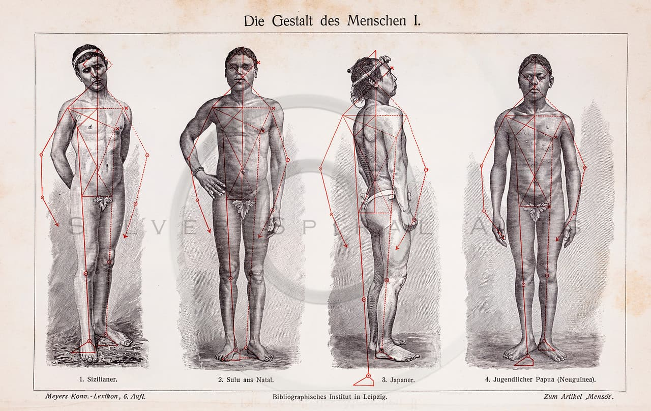Vintage illustration of Male Human Body Shapes from Meyers Konve