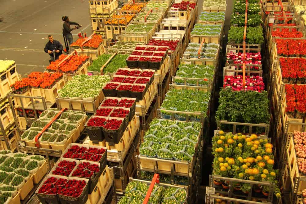 Aalsmeer Flower Auction building, Holland – largest building