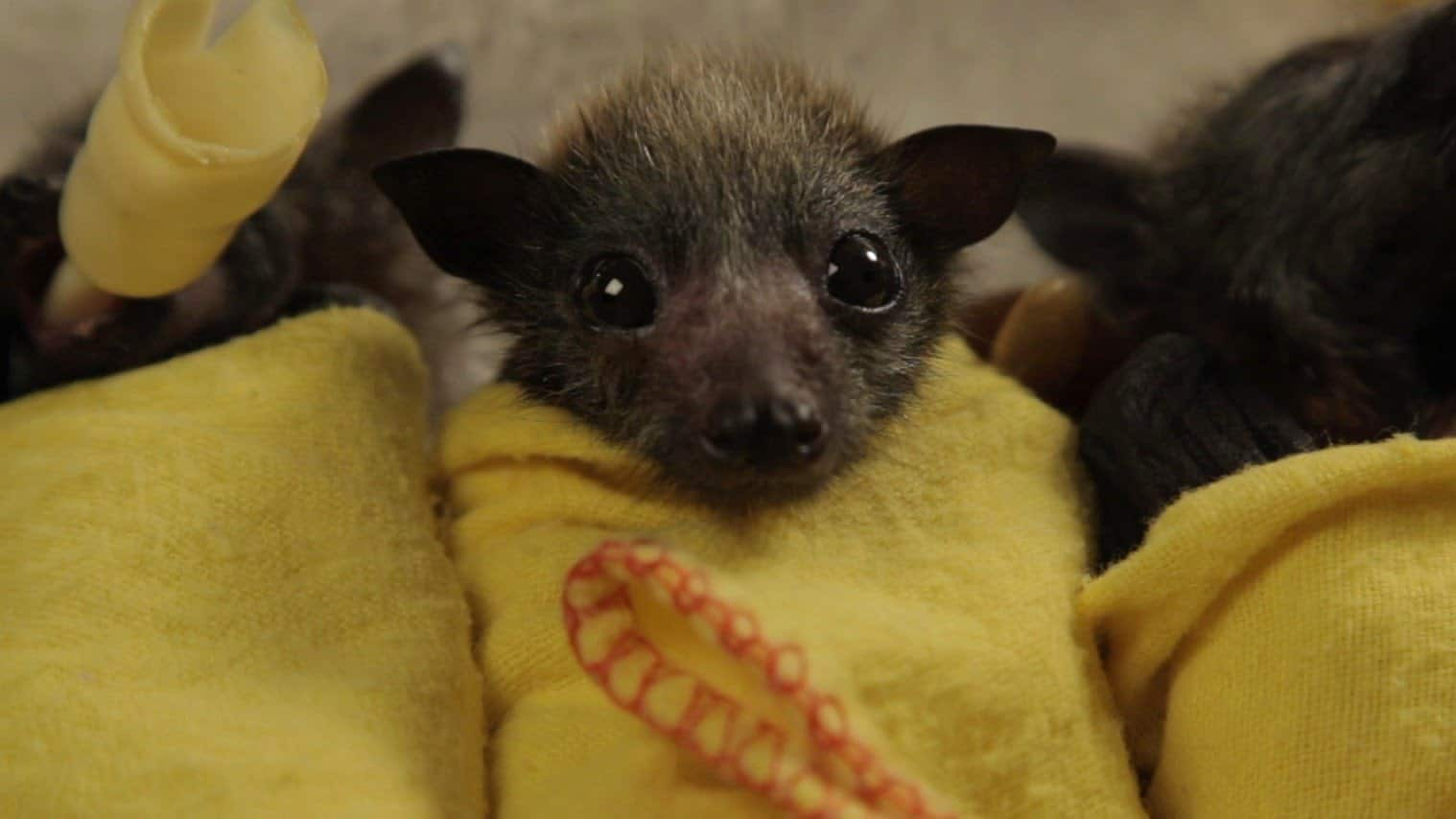 Bats – scariest animal