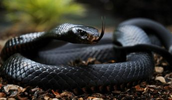 Kill or Be Food: 17 Most Terrifying Animals in The World