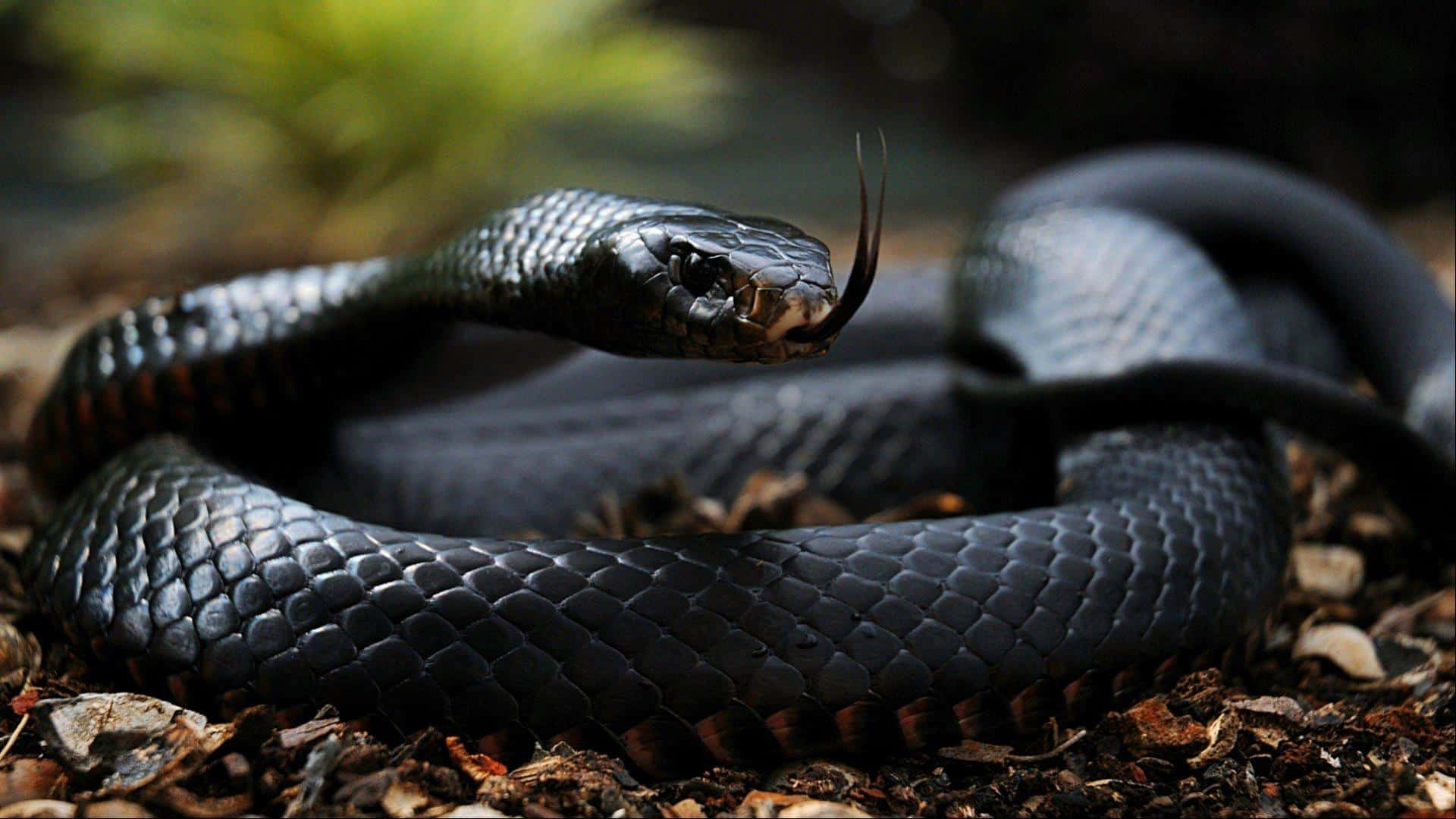 Black Mamba – scariest animals