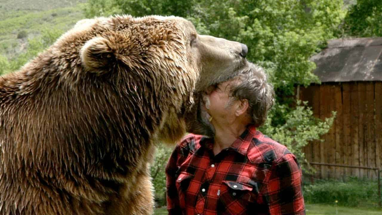 Grizzly Bear – scariest animal