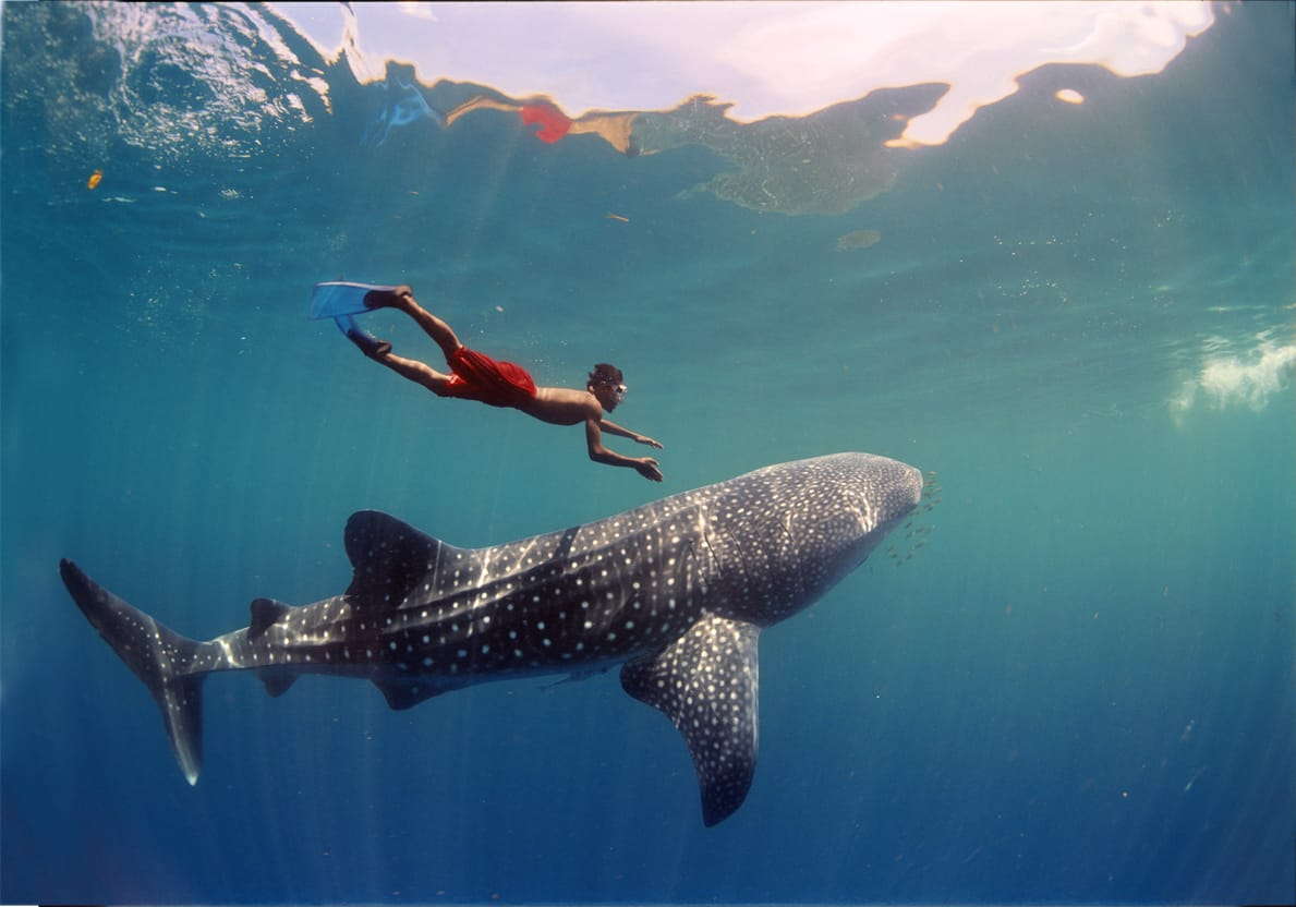 Most Sharks Are Completely Harmless – shark fact