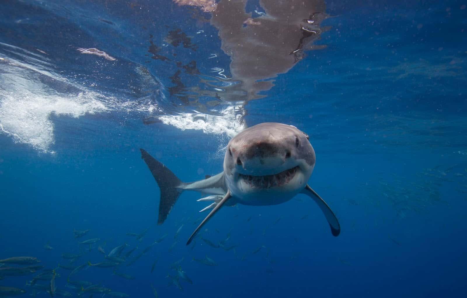 Shark Attack Fact