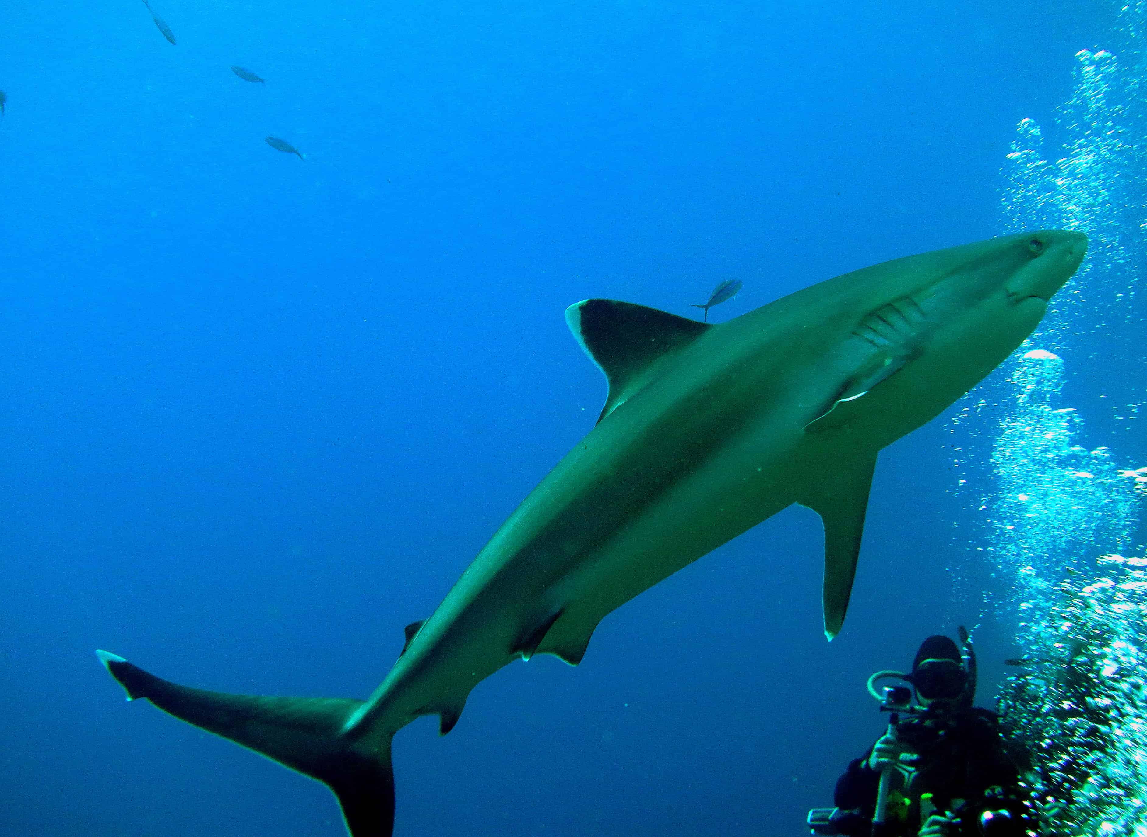 Shark Attack Survival Fact