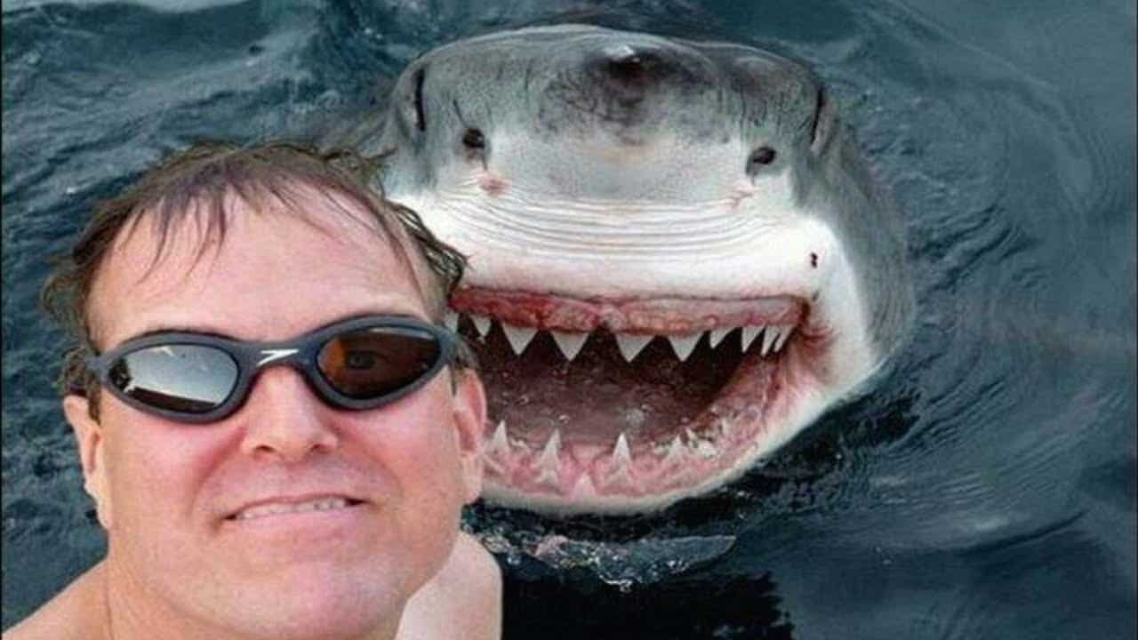 Shark Social Media – fact