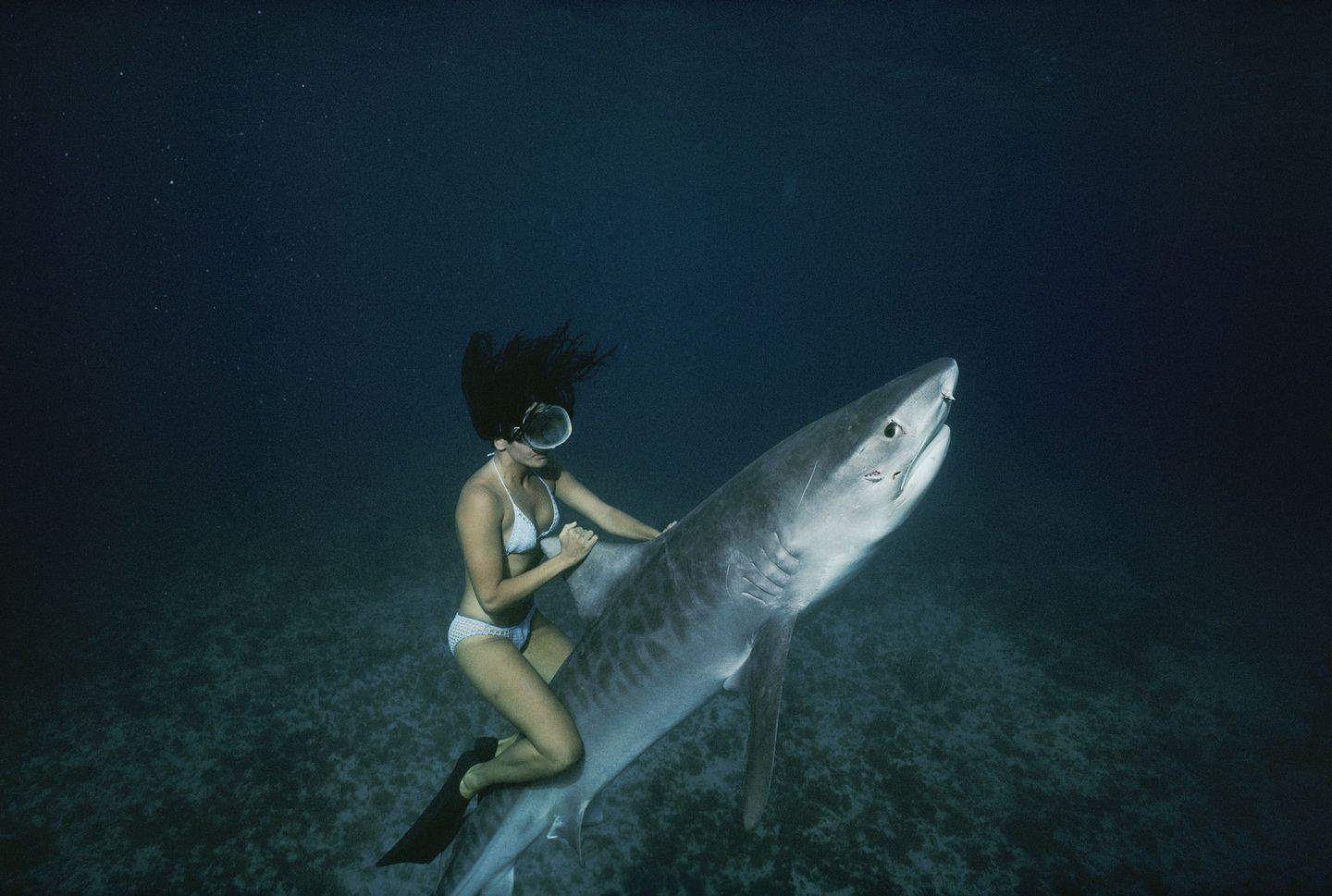 Sharks Aren't That Into You – fact