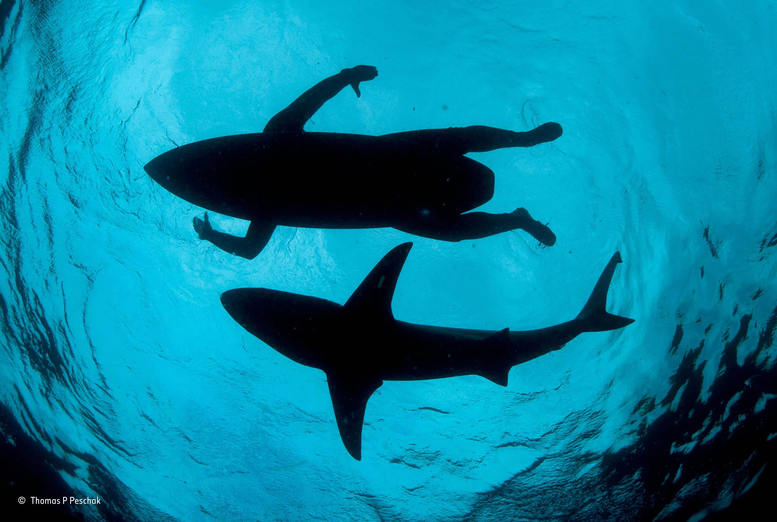 Surfers Are In More Danger From Sharks – fact