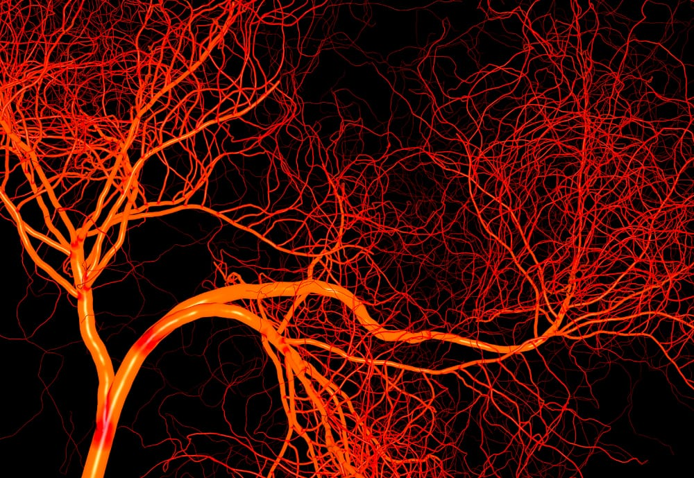 Blood Vessels – weed does
