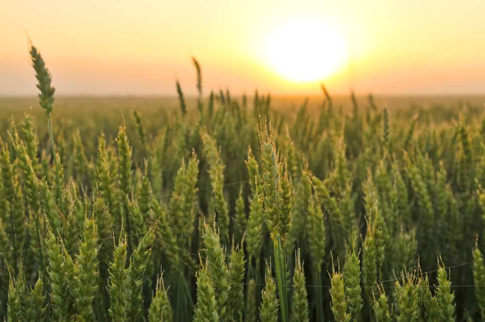 Agriculture Biotechnology – corrupt industry
