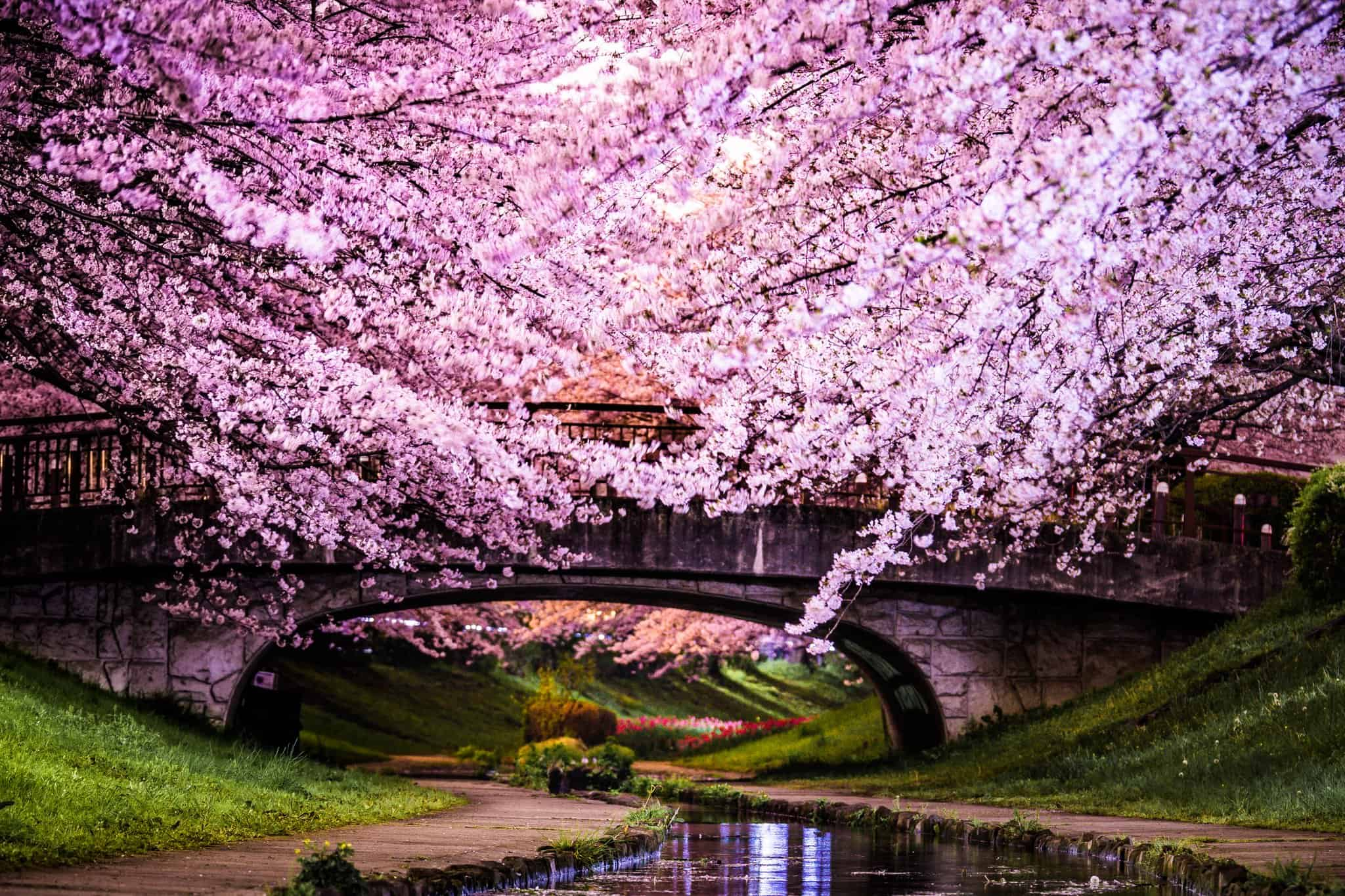 Japan – countries for ex-pats
