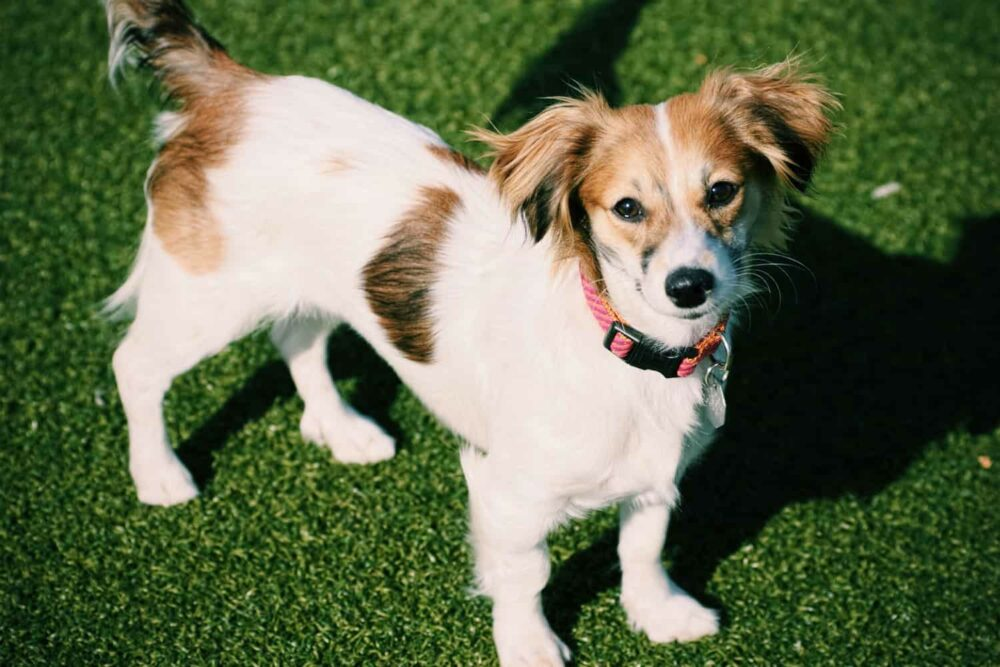 Best small dog breeds - Mutts