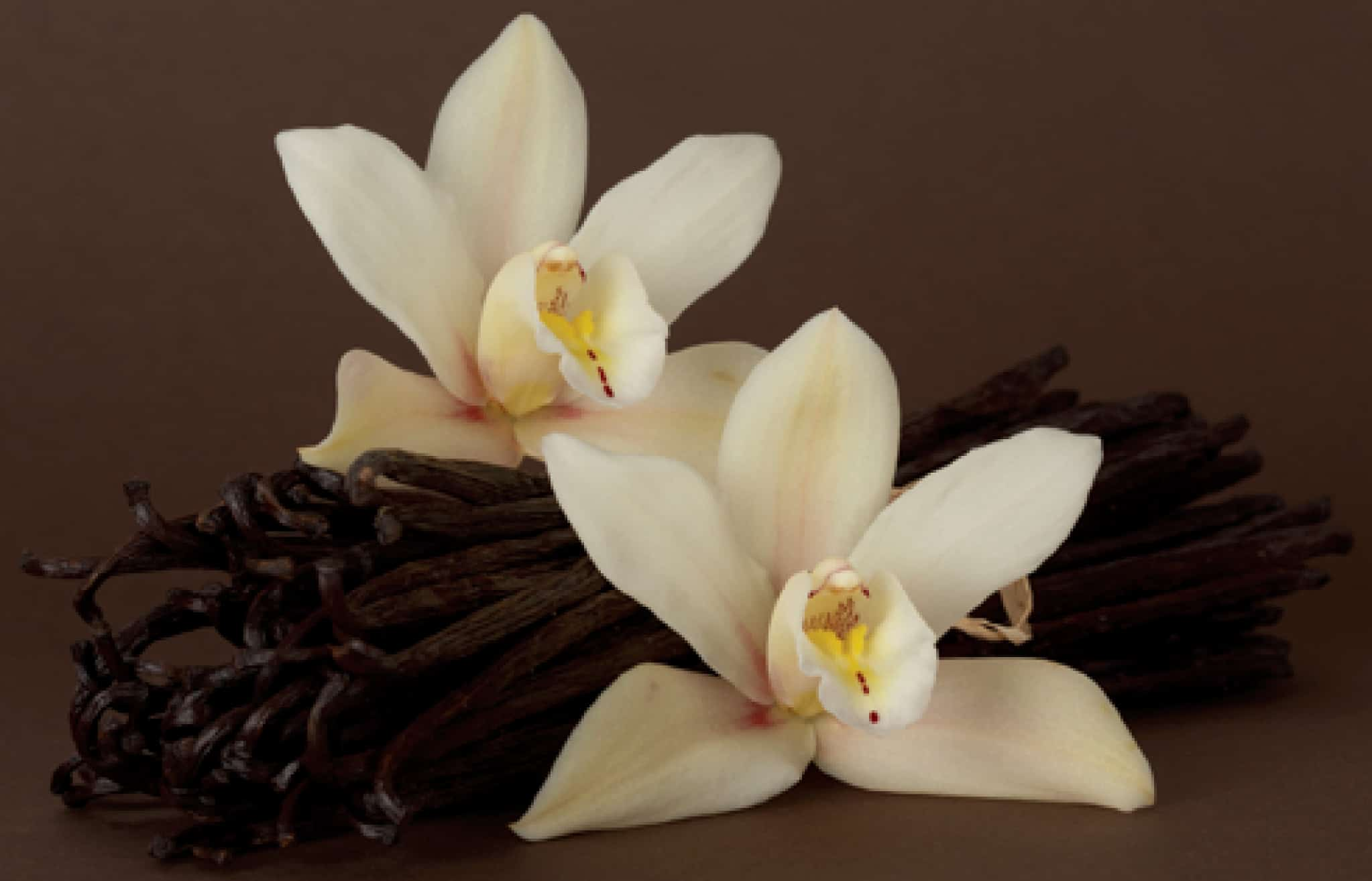 Vanilla – food fact