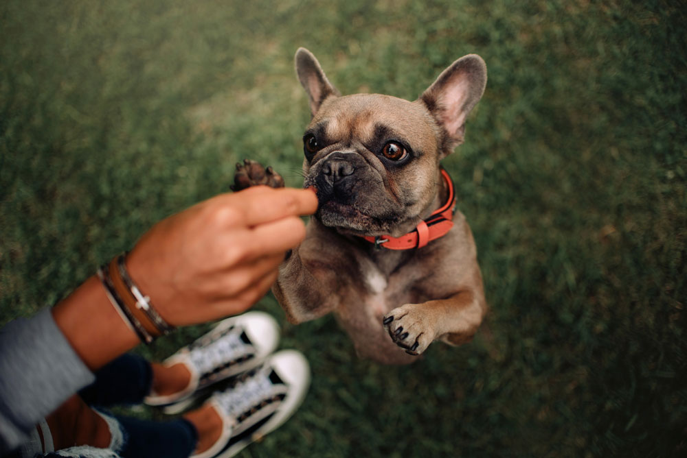 Best dog collars 15 Cool Dog Collars for Style and Safety (Reviews) in 2021