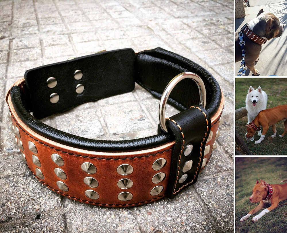Bestia Genuine Leather Dog Collar with Studs and Soft Leather Cushion