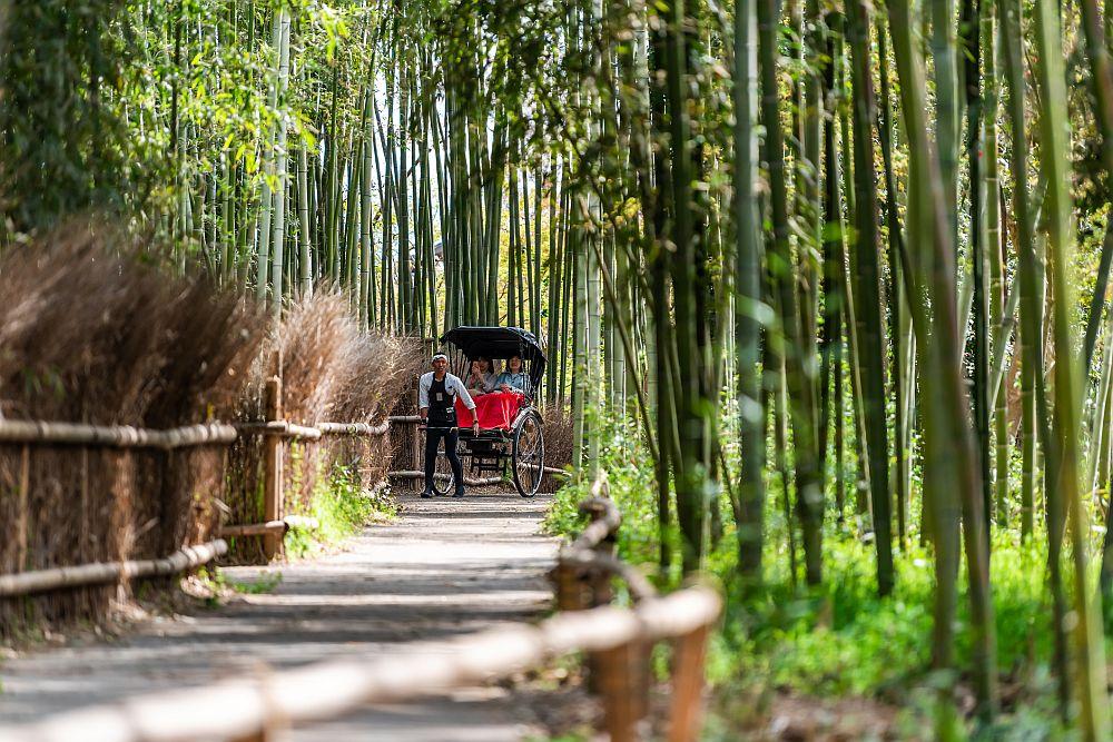 Arashiyama bamboo forest park