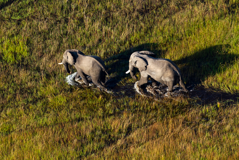 The Okavango Delta, elephants crossing